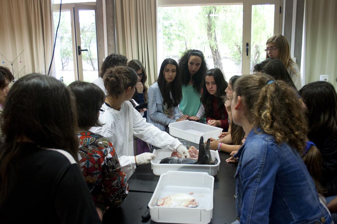 A aprender mais sobre o peixe na aula de ciências, em Vila do Conde