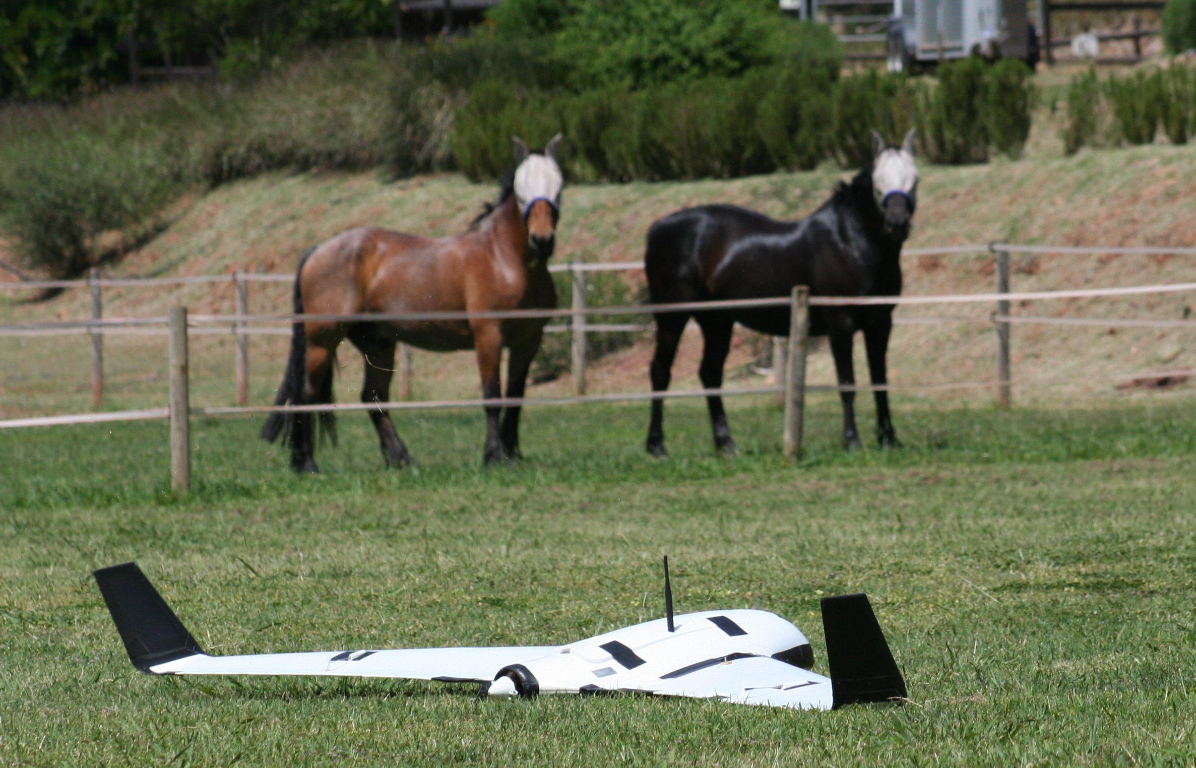 Teste com UAV no campo perto ca casa onde ficamos. No entanto, existe competição substancial para recuperar o veículo. Em particupal os animais que se encontram a pastar,mostram muito interessa nas nossa experiências.
